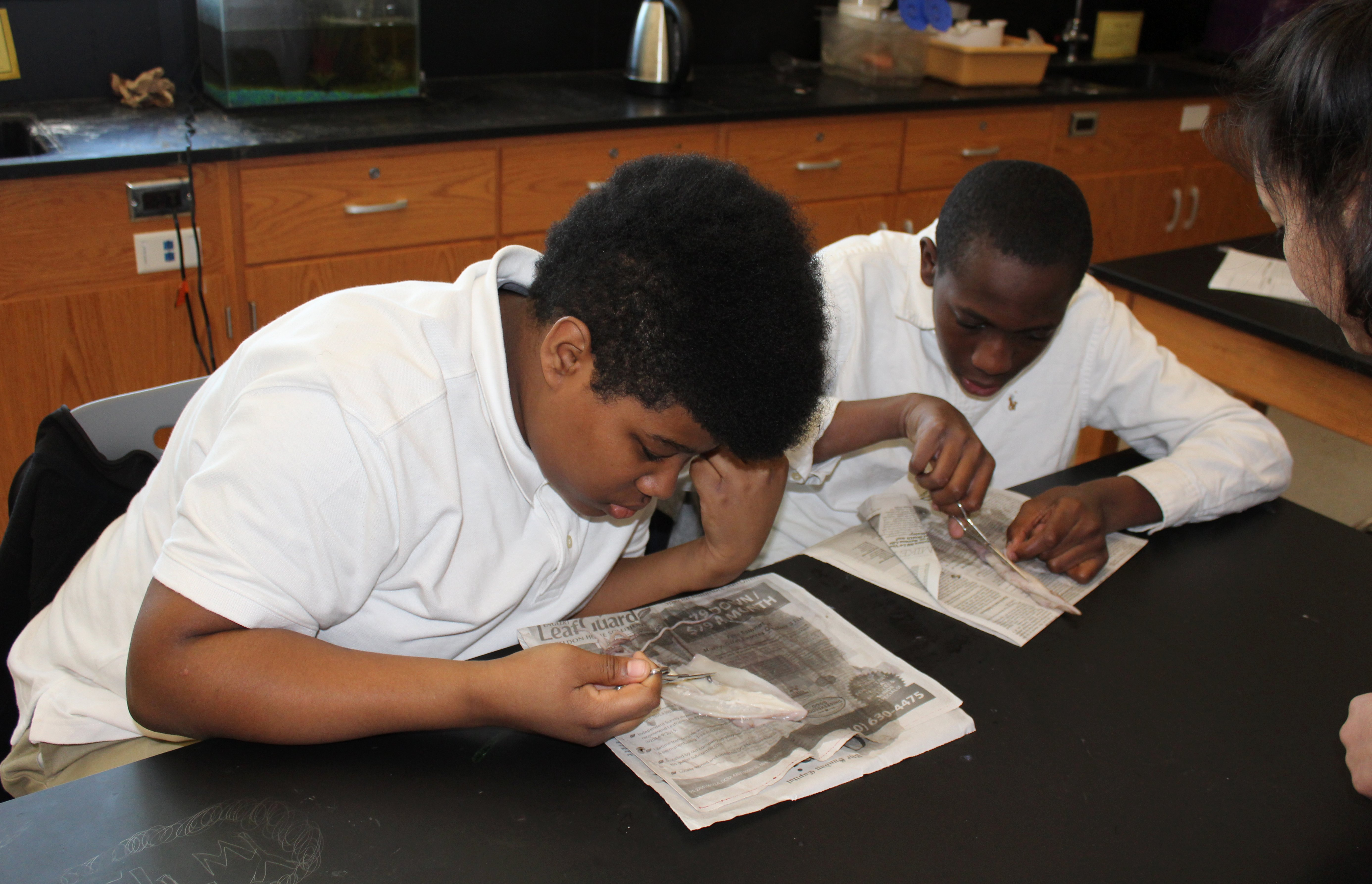 Students take a closer look at squid