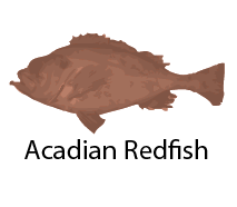 species_AcadianRedfish