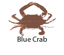 species_BlueCrab