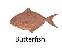species_Butterfish