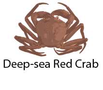 species_DeepseaRedCrab