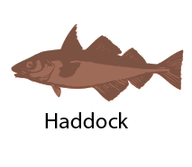species_Haddock