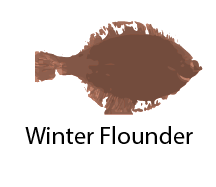 species_WinterFlounder