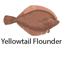 species_YellowtailFlounder