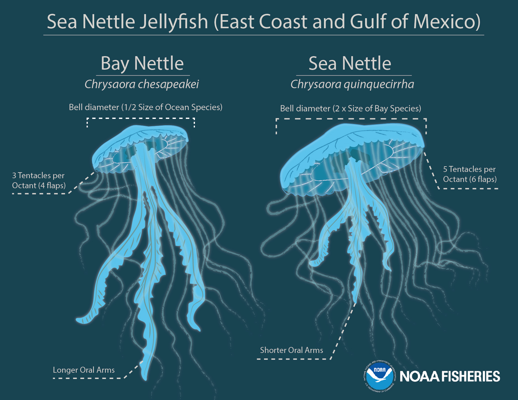 Jellyfish Species Discovered