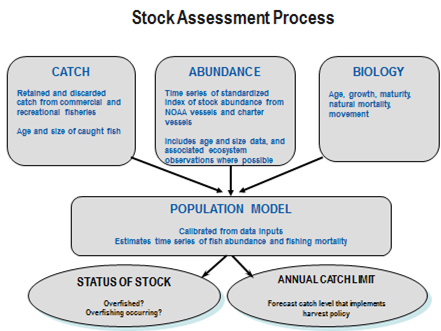 stock-assessment-process.png