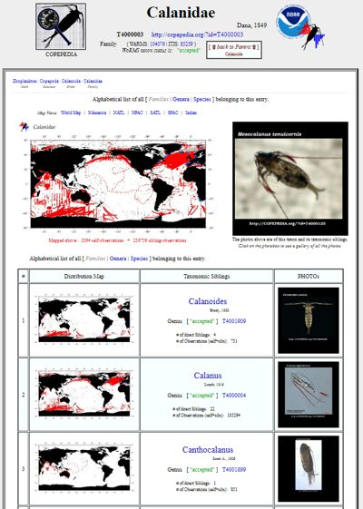 screenshot of the family Calanidae entry from COPEPEDIA