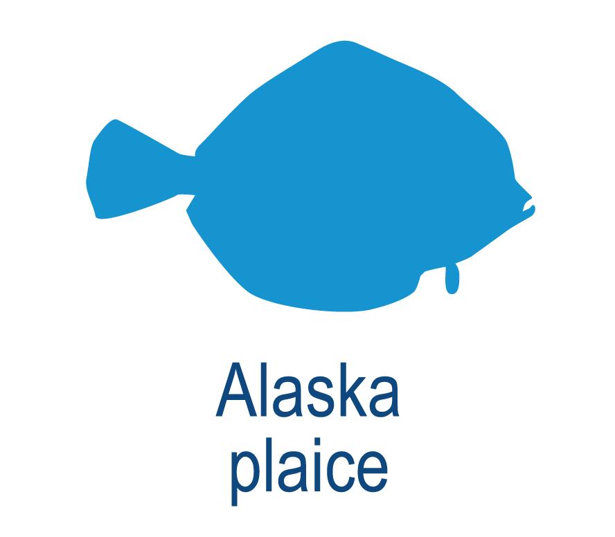 Alaska plaice