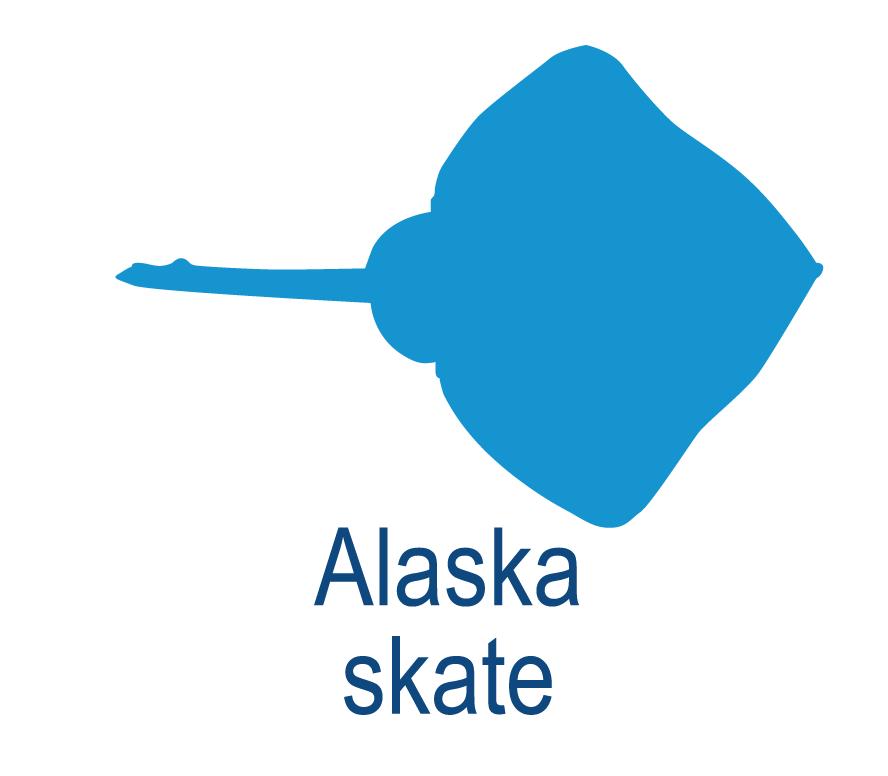Alaska skate