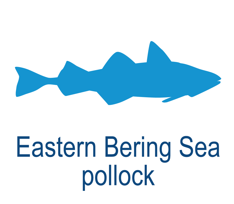Eastern Bering Sea pollock