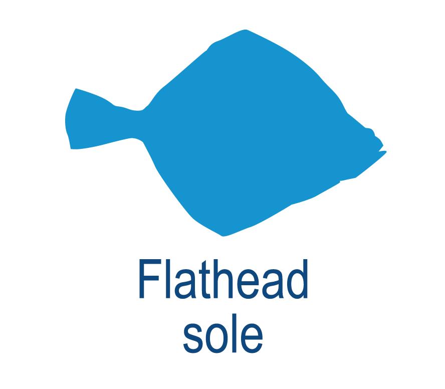 Flathead sole