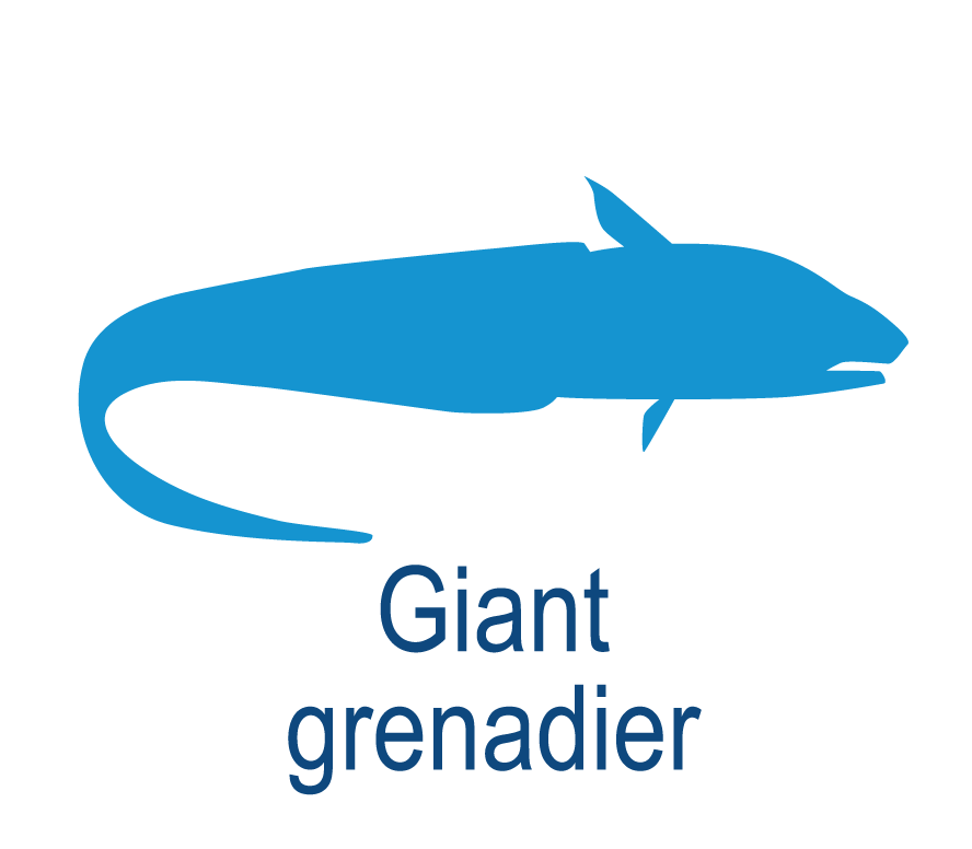 Giant grenadier