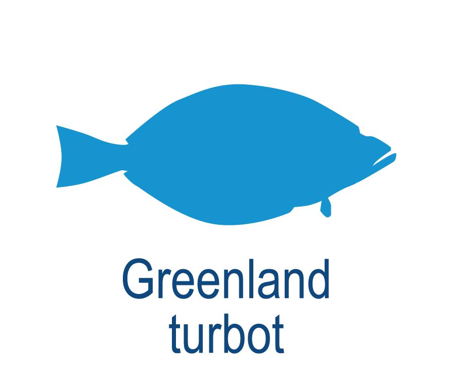 Greenland turbot