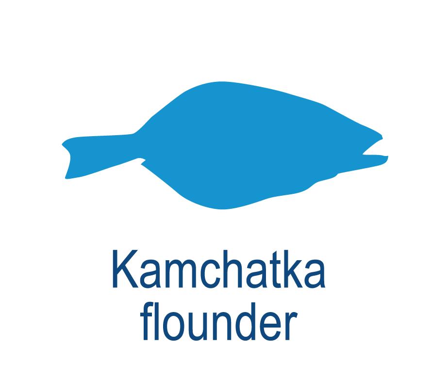 Kamchatka flounder