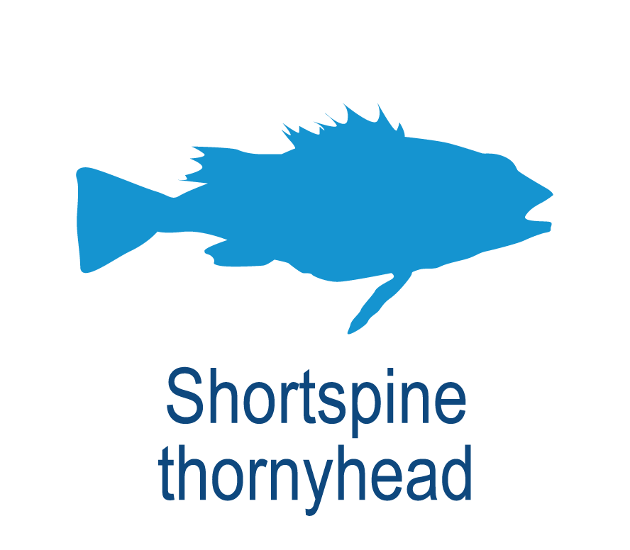 Shortspine thornyhead