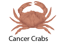 Cancer Crabs